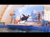Дельфинарий Владимир 2014 года